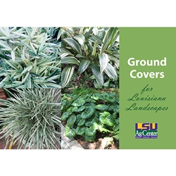 Ground Covers for Louisiana Landscapes