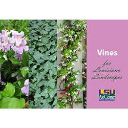Vines for Louisiana Landscapes