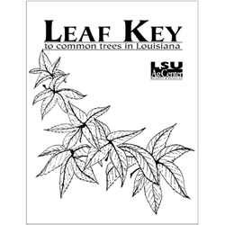 Leaf Key to Common Trees in Louisiana